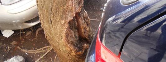 Carlo Alberto, gli alberi e la vergogna