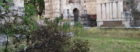 Le condizioni incresciose dell'area verde attorno a Porta Maggiore